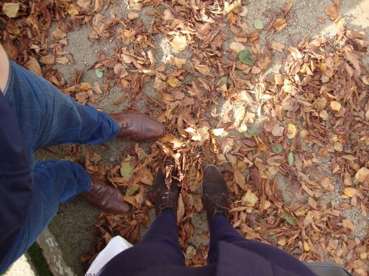 The orange leaves of autumn