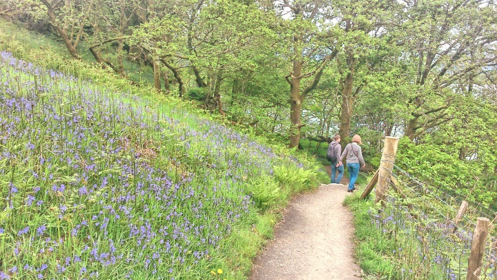 Bluebells in Balmaha