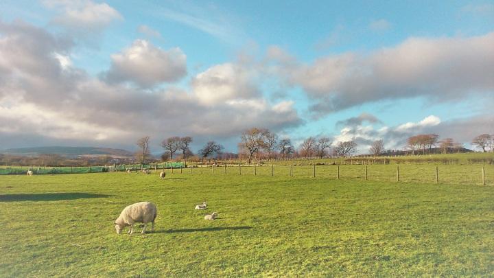 Fields near the tearoom