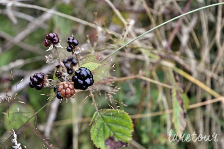 Loch Ard berries