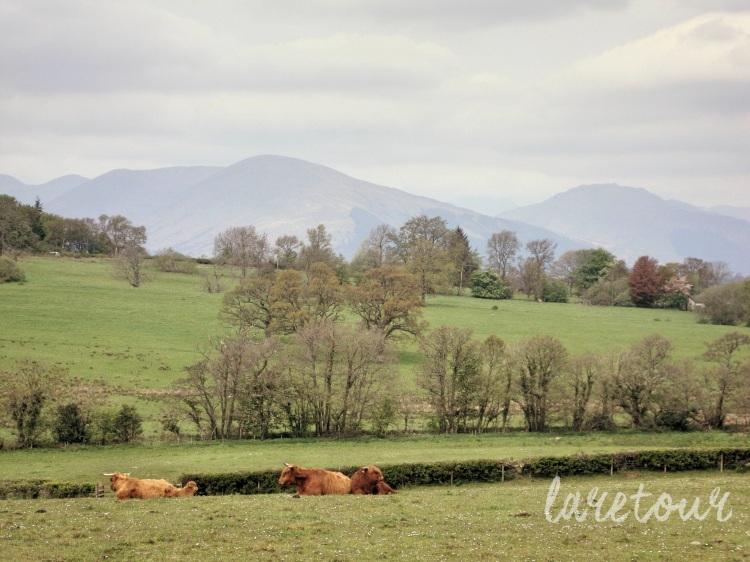 Loch Lomond 001