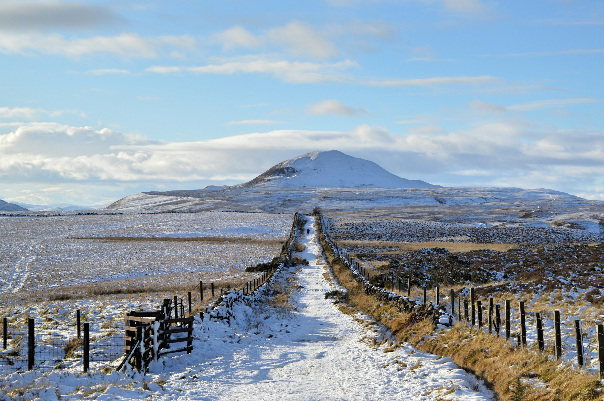 Walking in the Lomond Hills, near Falkland, Fife
