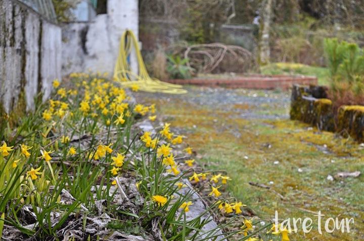 achamore-gardens-001