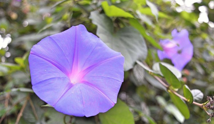 botanics-004