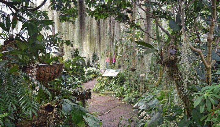edinburgh-botanics--3