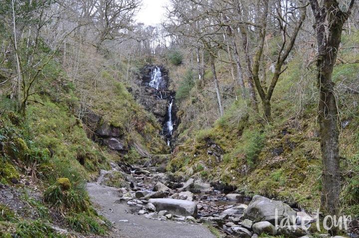 queen-elizabeth-forest-walks-002