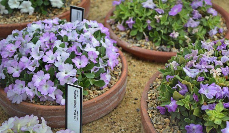 royal-botanics-004
