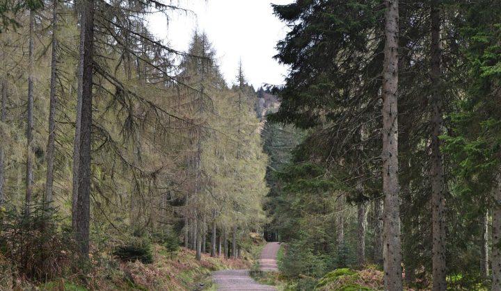 trossachs-walk-004