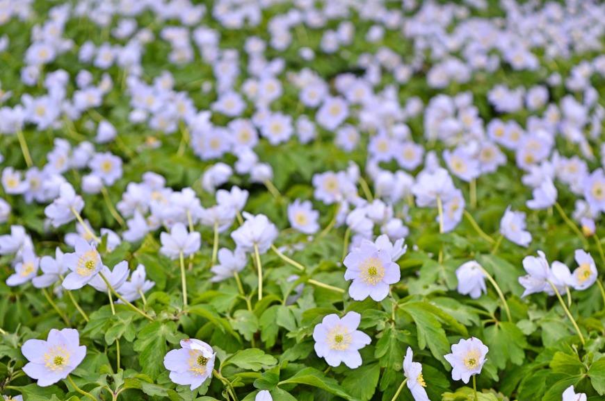 edinburgh-botanic-gardens-flowers