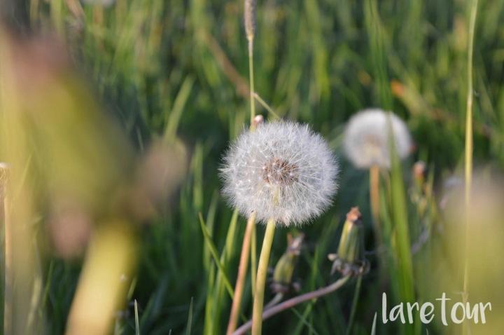 life-lately-may-laretour-004
