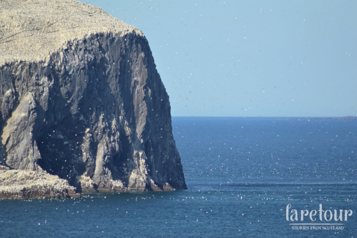 Watching the gannets swoop around Bass Rock