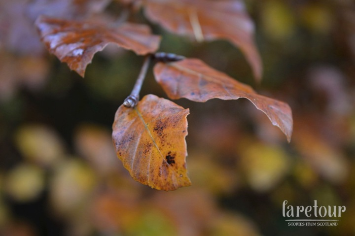 hermitage-dunkeld-autumn-004