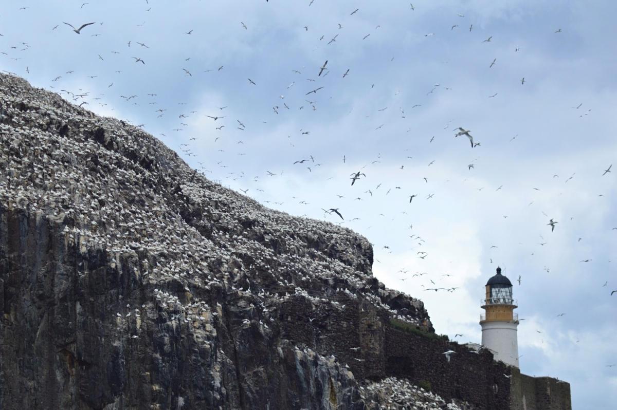 Away with the birds: A trip to Bass Rock – LARETOUR | Stories from ...