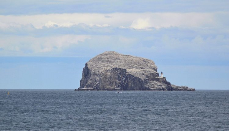 Boat trips to Bass Rock with the Scottish Seabird Centre