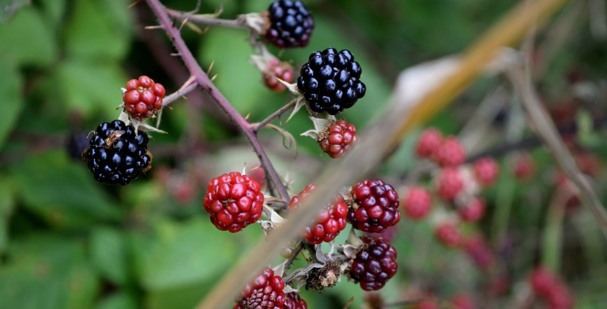 berries-thoughts-on-blogging-header