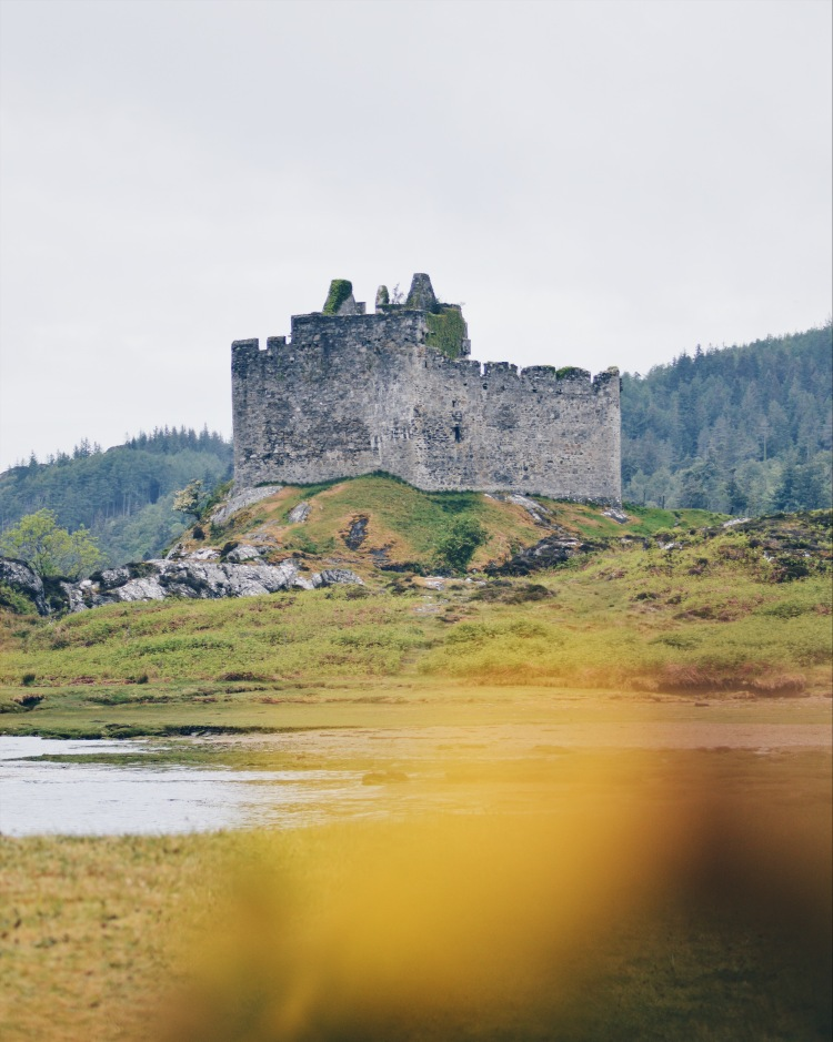A castle on the west coast of Scotland framed by yellow gorse