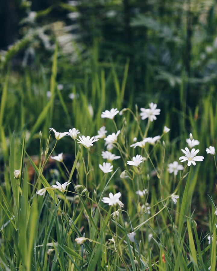 White wildflowers in the grass at the Birks of Aberfeldy