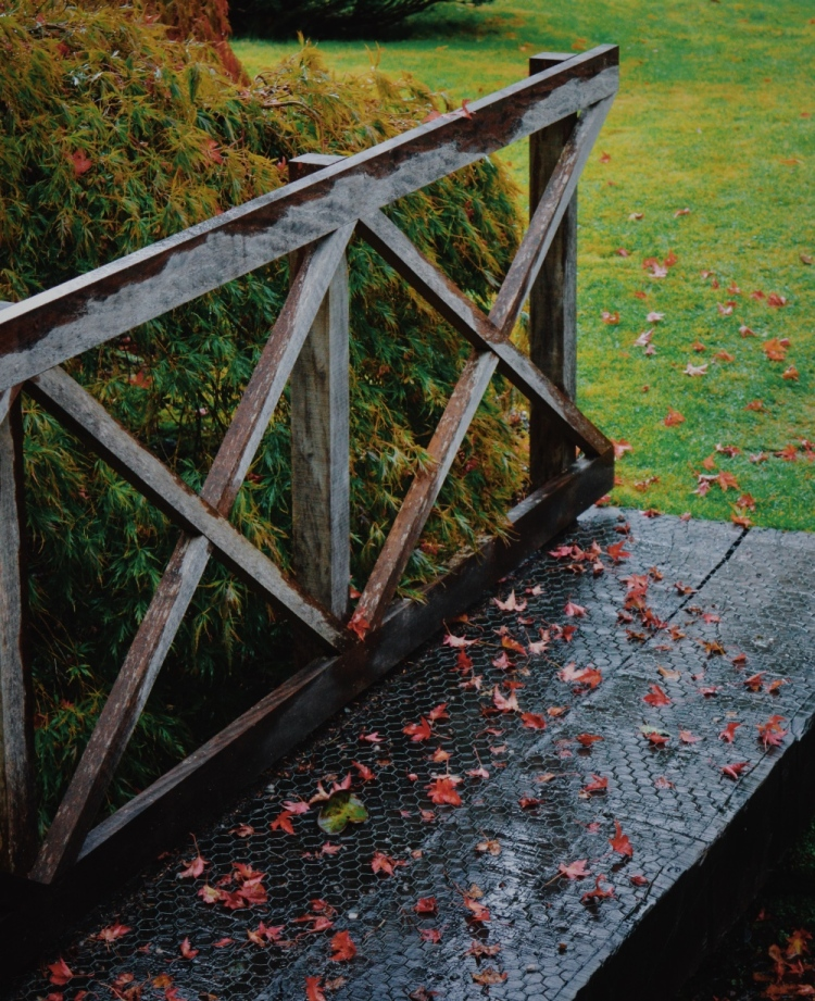 leaves on a wooden bridge at mount stuart