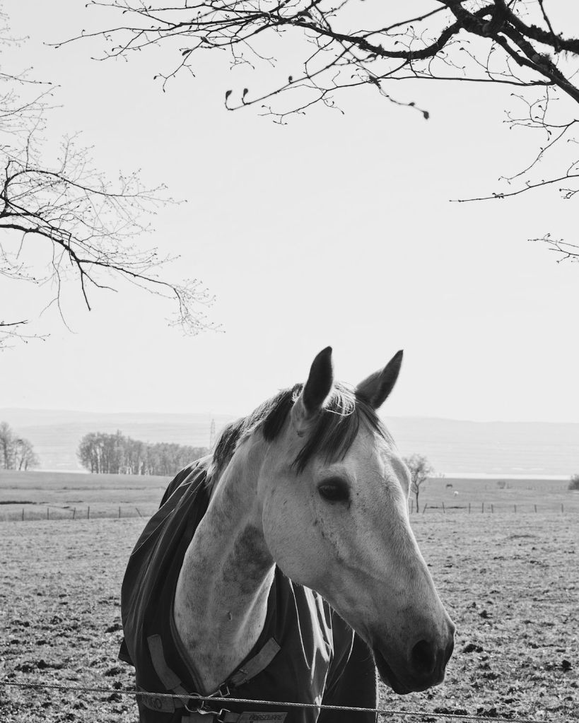 A black and white photograph of a horse framed by branches