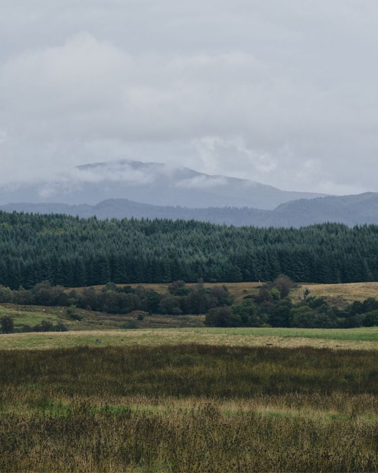 Forest and hills in Stirlingshire covered in cloud